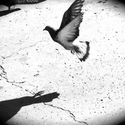Ashley_bird