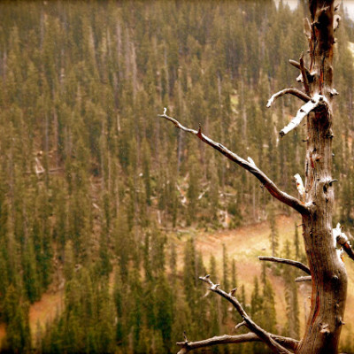 Ashley_dead-tree